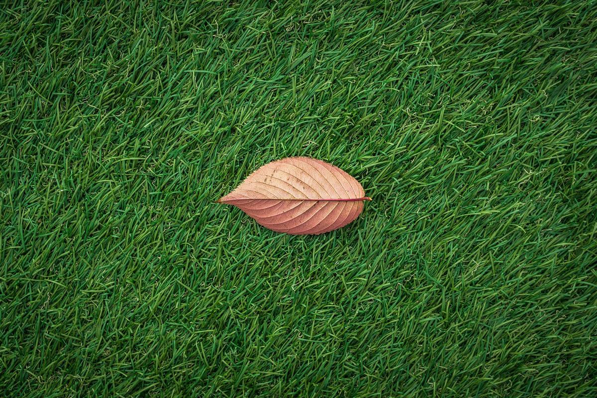 人工芝のイメージ写真
