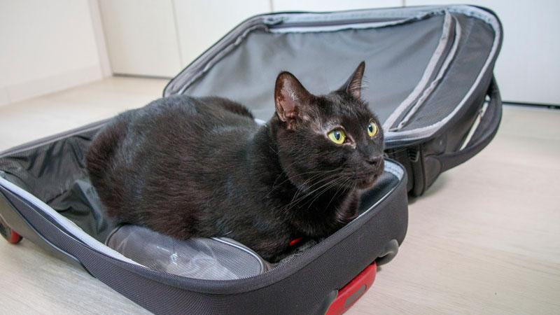 キャリーケースに猫が入っているイメージ写真