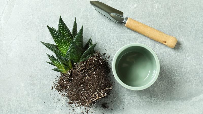 植木鉢から中身を取り出したイメージ写真