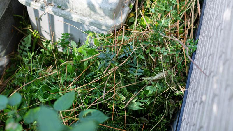 庭の雑草のイメージ写真