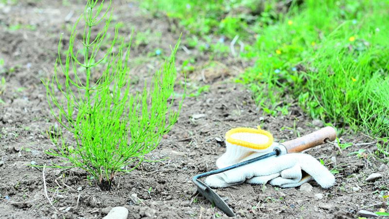庭の雑草の手入れをするイメージ写真