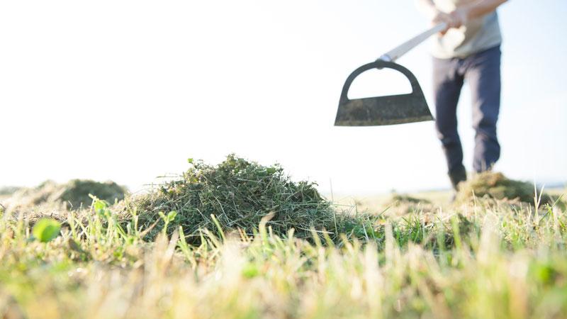 処理した雑草の山のイメージ写真