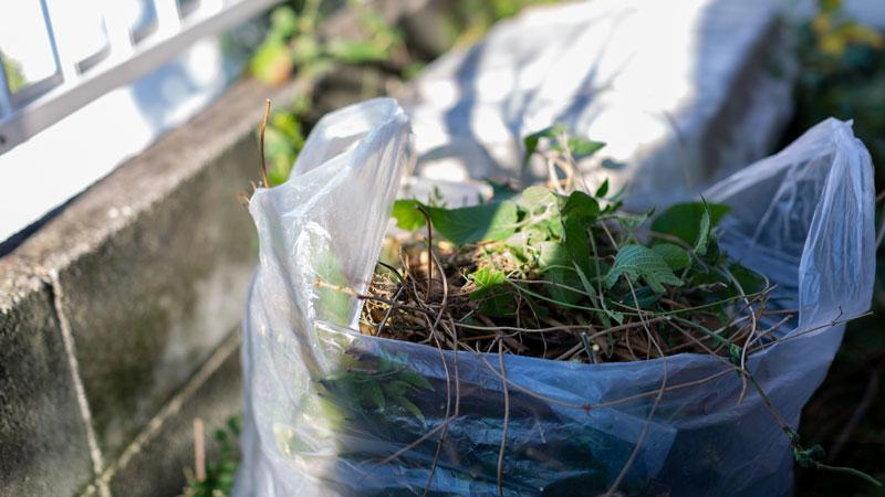 袋に詰めた雑草のイメージ写真